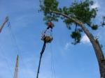 treerappel1