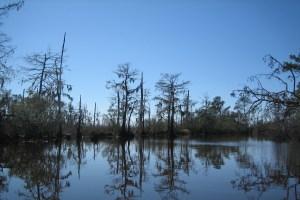cypress-bayou