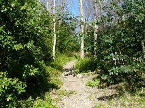 uphill-trail