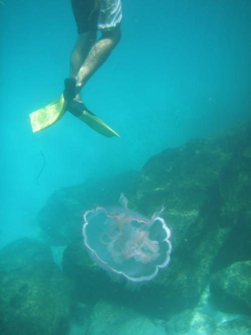 Jellyfins