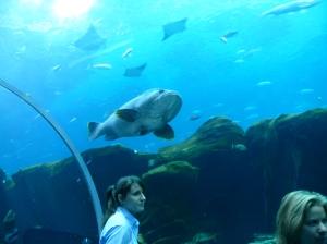 bigtunnelfish