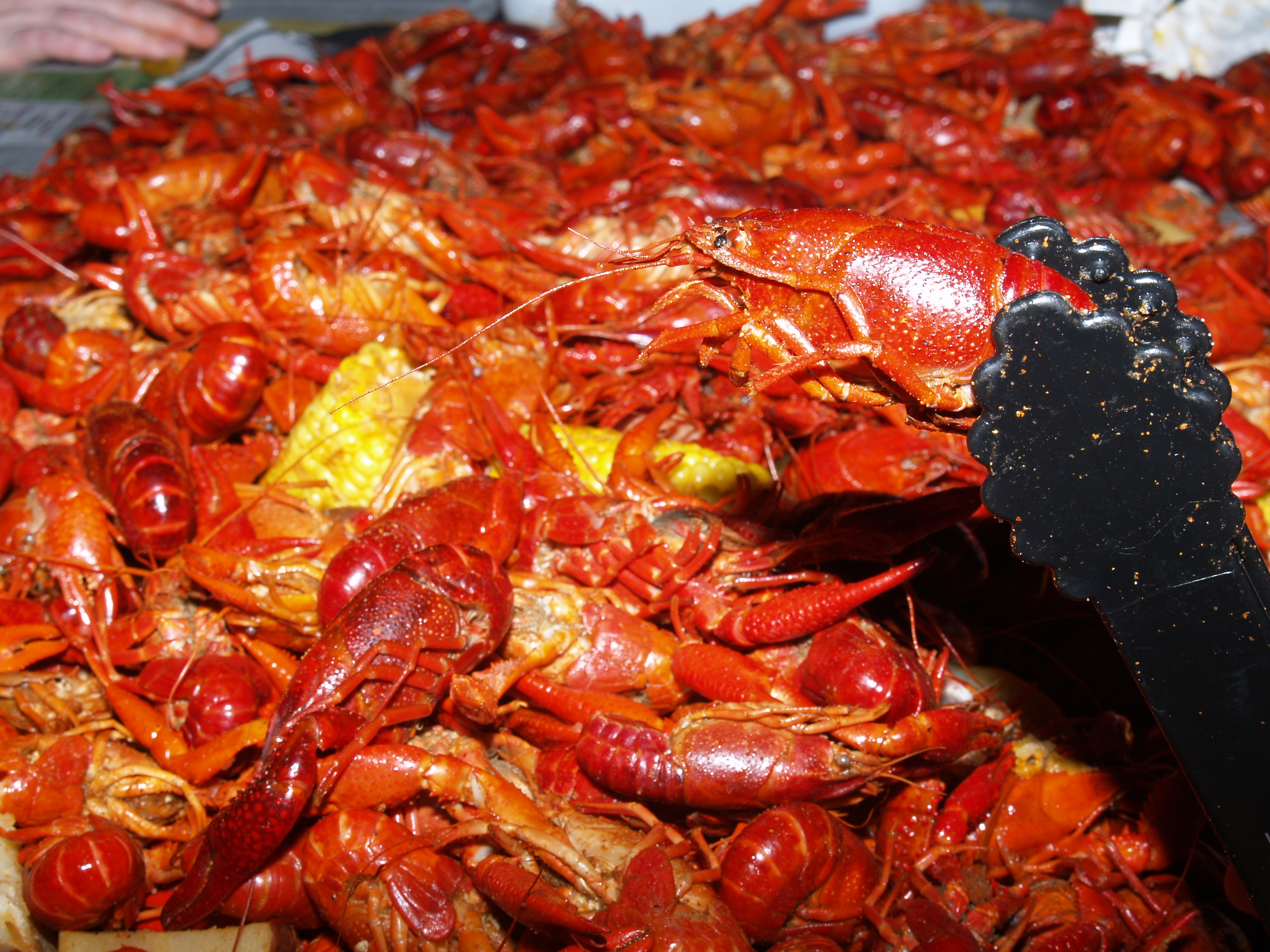 Jazz Fest / Crawfish Boil | NO Adventure