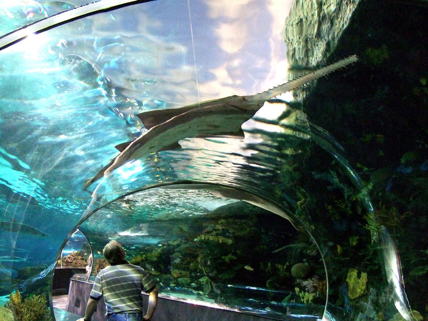 Ripley S Aquarium Gatlinburg Tour